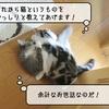 猫雑記 ~すずめとむくの初接触~