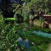 「ハムラナ・スプリングス森林公園」~静寂な清流とレッドウッドの世界!!