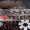 コーヒー土でお花を植えてみました