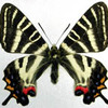 蝶研出版の廃業
