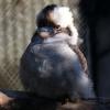 『キャンベルタウン野鳥の森』中~大型の鳥