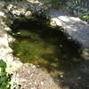 カメトープ2号池にアオコが発生してしまいました①