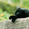 黒猫はなんの夢をみているか
