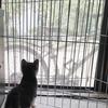 ニコのお迎え 〜4日間で生後1ヶ月の仔猫はどれだけ成長するか?〜