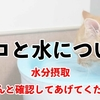 ネコとお水の注意事項