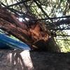 トゲトゲ森のパーゴラ討伐2