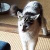 ね、ねねね、猫を飼い始めましたー!!!ふぁあああああああ!!!!!!