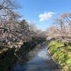 【日常】岐阜各務原市の新境川堤にお花見行きました!