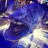 沼津港深海水族館へ行って来たよ!帰りは深海魚バーガー