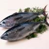 栄養たっぷり!レシピ2つ~魚編~
