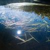 白駒池の秋の景色と水草/美ヶ原で見つけたキジ