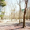 広々で静かなキャンプが久しぶりということに気づく林間キャンプ「スミカキャプフィールド」