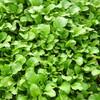 ③私が最近猛烈に感動した🍅無農薬&無肥料 農業の知恵✨