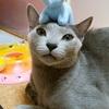 【断酒46日目】酔って猫に迷惑かけた反省