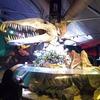 【シドニー】大人も楽しめる水族館「シーライフ」
