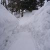 身の危険を感じるほどの雪ですわぁ、北陸福井ですけど