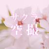 【ドローンで桜空撮】DJIのドローンPhantom4 Pro でサクラの撮影をする!