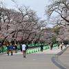 🌸本日の上野公園 桜の開花状況🌸