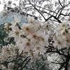 【安倍首相】3月28日の会見の超個人的感想。説得力がないと思うのは私だけ!?