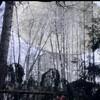 アンドレイ・ズビャギンツェフ『ラブレス Нелюбовь / LOVELESS』