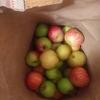 食べる喜び☆りんごがいっぱいアップルパイ