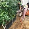 タイタニック畑は土がいいからジャングル化