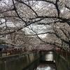【速報】目黒川の桜 開花状況【2018年3月23日】