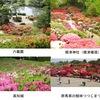 """春から初夏の花7 ツツジ2 ツツジの名所が日本全国で知られています.残念ながら,今年はその多くが閉園.ツツジは日本だけではなく世界でも好まれている花「ツツジ科ツツジ属Rhododendronのうち、シャクナゲ類を除いた半常緑性または落葉性のものの総称」 ツツジ科植物に含まれている有毒成分として""""グラヤノトキシン grayanotoxin"""" が知られています.全てのツツジ科植物,ツツジ属植物に含まれているわけではありません."""