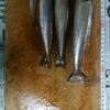 【こんな感じで書こうかなと】隠れ家的シロギス釣りのメッカ。『防府市小茅漁港』