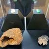 古代の宝石箱 あるいは 日本古代史のパンドラの箱? 唐古・鍵遺跡