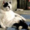 【減量】を終えた細マッチョ その後1週間の変化 体重と体脂肪はすぐ戻る??