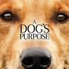 【タイミングを逸して映画レビューが下書きのまま放置されていたのをリライトするシリーズ1】【ネタバレ映画レビュー:2017年公開】A Dog's Purpose / 僕のワンダフル・ライフ