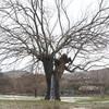 木の中で水がわき出ている現象、その秘密は?