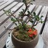盆栽に小さな幸せ