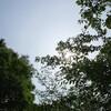 暑過ぎる6月 生きている地球に、生き物が生かされている