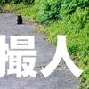 とりんちゅ!(KDP)
