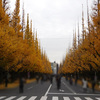 駅からハイキング:新宿区博物館巡りと神宮外苑いちょう並木4(明治神宮外苑)