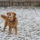 犬は寒いの?寒がりなの?最強寒波が来て雪が降ったらどうなるの?