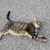 8月前半の #ねこ #cat #猫 その2