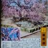 名古屋市中川区の荒子公園へ「呉服しだれ」〔くれはしだれ〕という梅を見に行った