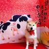 2021スタート🎍今年もよろしくお願いします!!柴犬『きなこ』のご挨拶🎍おせち料理