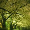 帰り道の夜桜