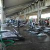 [地域] 銚子のはずれ(4)−9  レポート 漁港市場巡り