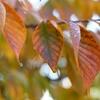 香りで覚える山の植物 VOL.02 「サクラ」