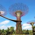 シンガポール・ガーデンズ・バイ・ザベイの割引チケットが、いつでも買えるサイト♪