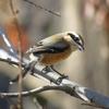 美しい野鳥写真を撮影するコツ【野鳥撮影をもっと楽しもう!】