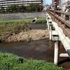 「中津川への鮭の遡上」について