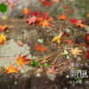 二十四節気七十二候 「小雪 朔風払葉」 (2016/11/26)