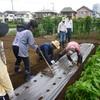 <農業講座日記> 白菜、種まき準備 枝豆は開花(8月19日)