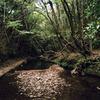 大多喜の会所の森へー暗がりでも写ルンですは写るのかー